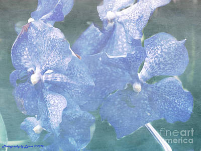 Mixed Media - Vanda Orchid by Gena Weiser