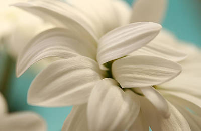 Photograph - Vanilla Whip by Connie Handscomb