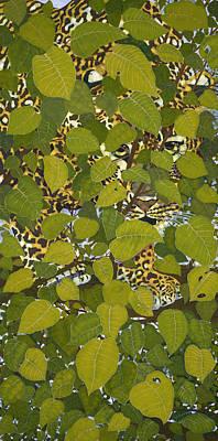 Vanishing  Leopard Original
