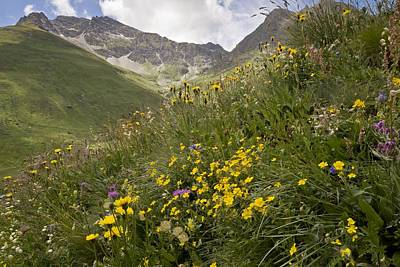 Pasture Rose Photograph - Vanoise National Park, French Alps by Science Photo Library