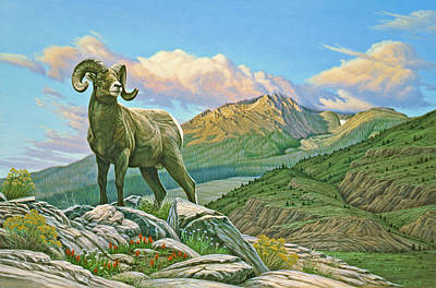 Ram Painting - Vantage Point - Bighorn by Paul Krapf