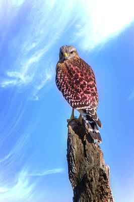Wildlife Photograph - Vantage Point by Mark Andrew Thomas