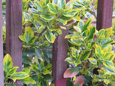 Photograph - Variegated 2 by Linda L Martin