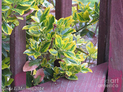 Photograph - Variegated 3 by Linda L Martin