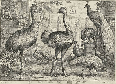 Ape Drawing - Various Birds And A Monkey, Jan Griffier by Jan Griffier (i) And Pierce Tempest