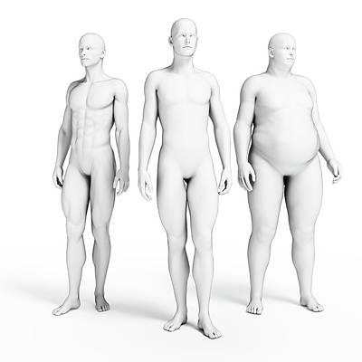 Various Body Shapes Art Print