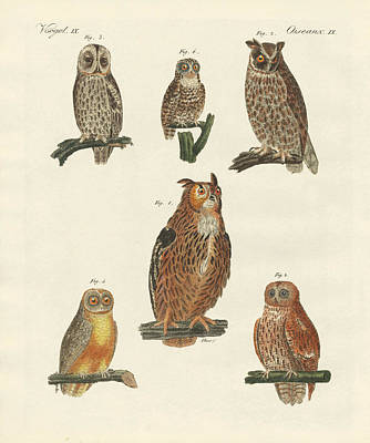 Barn Owl Drawing - Various Kinds Of Owls by Splendid Art Prints