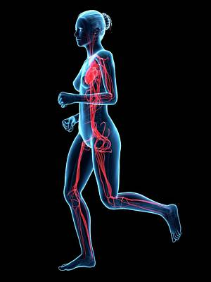 Jogging Photograph - Vascular System Of Runner by Sebastian Kaulitzki