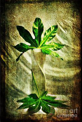 Photograph - Vase And Leaves by Randi Grace Nilsberg