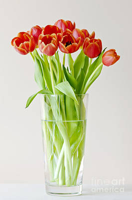 Photograph - Vase Of Tulips by Dee Cresswell