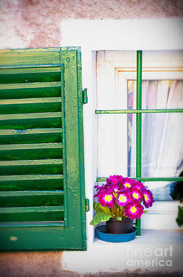 Floral Vintage Window Photograph - Vase With Primroses And Green Shutter by Silvia Ganora
