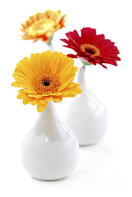 Vases With Gerbera Flowers Art Print by Elena Elisseeva
