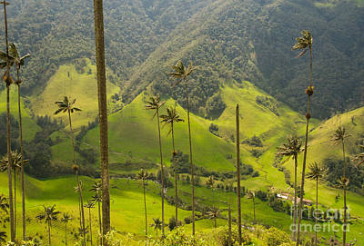 Salento Photograph - Vax Palm Trees Of Cocora Valley  by Konstantin Kalishko