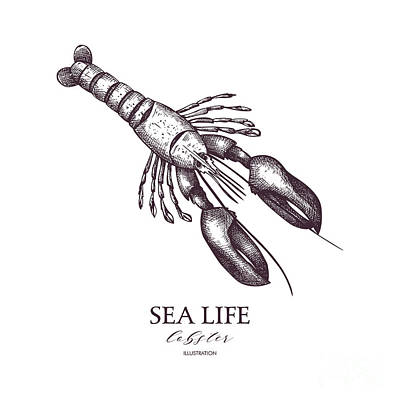 Engraving Wall Art - Digital Art - Vector Sea Life Illustration. Hand by Geraria