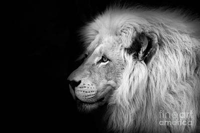 Of Cats Photograph - Vegas Lion - Black And White by Ian Monk