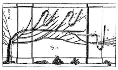 Photograph - Vegetable Staticks, 1727 by Granger