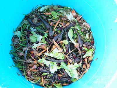 Photograph - Veggie Mandala by Brian Boyle