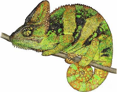 Veiled Chameleon Art Print