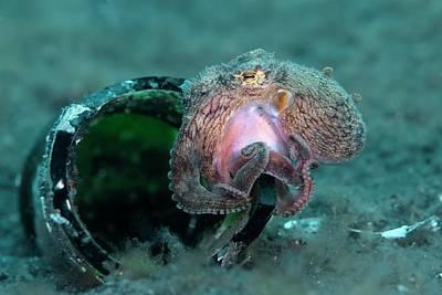 Veined Octopus Sheltering Art Print