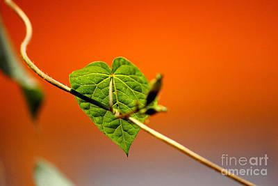 Veins Original by Manuel Bonilla Photography