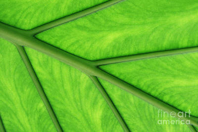 Art Print featuring the photograph Veins Of Life by Judy Whitton