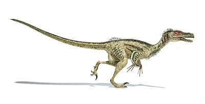 Velociraptor Dinosaur Art Print by Leonello Calvetti