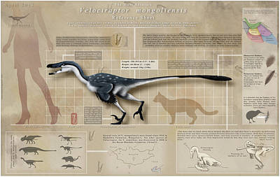 Infographic Digital Art - Velociraptor Infographic by Christian Masnaghetti