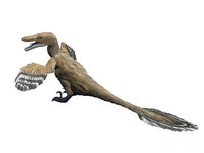 Velociraptor Digital Art - Velociraptor Mongoliensis, Late by Nobumichi Tamura