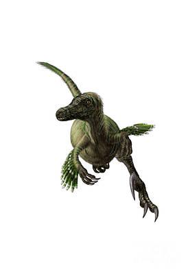 Velociraptor Digital Art - Velociraptor, White Background by Yuriy Priymak