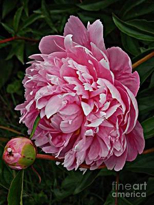 Photograph - Velvet Petals by Marcia Lee Jones