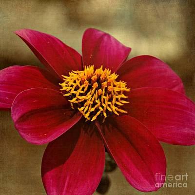 Photograph - Velvet Petals by Patricia Strand