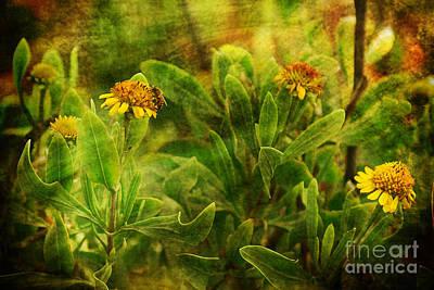 Photograph - Velvet Summer by Olga Hamilton