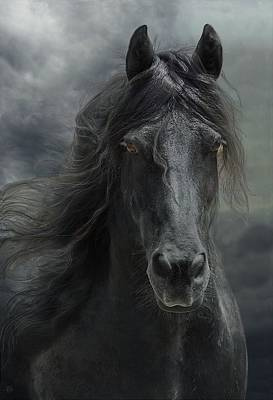 Black Friesian Photograph - Veni Vidi Vici  by Fran J Scott