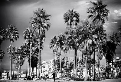 Venice Beach Palms Photograph - Venice Beach Palms by John Rizzuto