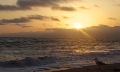 Photograph - Venice Beach Sunset by Rollie Robles