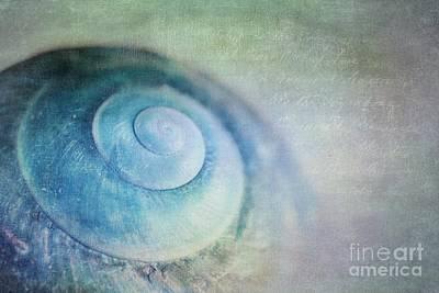 Snail Photograph - Venuto Di Mare by Priska Wettstein