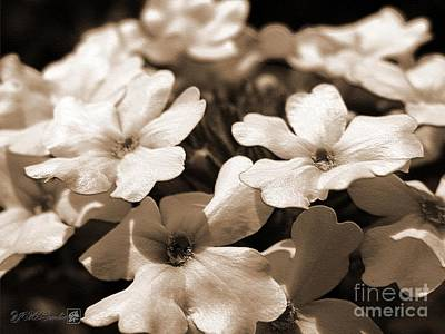 Mccombie Photograph - Verbena Named White Hail by J McCombie