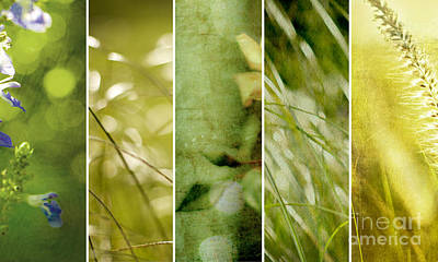 Photograph - Verdant Files by Linde Townsend