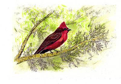 Flycatcher Drawing - Vermillion Flycatcher Bird by Syl Lobato