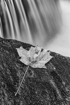 Vermont Wilderness Photograph - Vermont Autumn Maple Leaf Black And White by Andy Gimino