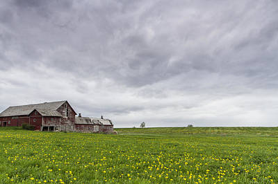 Vermont Barn Grass Dandelion Field Storm Clouds Art Print