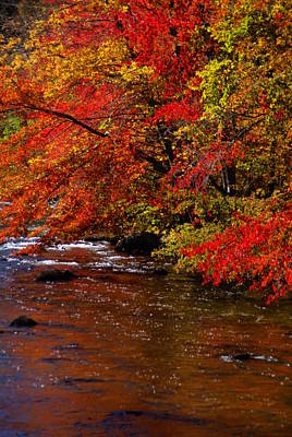 Photograph - Vermont Fall Color 1 by Robert Lozen