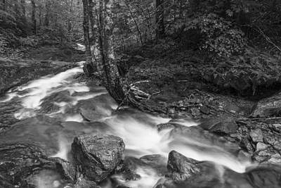 Vermont Forest Foliage Black And White Waterfall Art Print by Andy Gimino