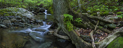 Vermont Landscape Brook Stream Forest Waterfall Art Print by Andy Gimino