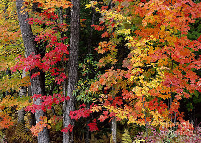 Photograph - Vermont October Woods by Alan L Graham