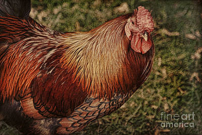 Vermont Rooster Art Print