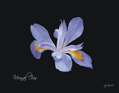 Photograph - Vernal Iris by Joe Duket