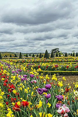 Photograph - Versailles Spring by Elvis Vaughn