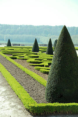 Versailles Topiary Garden Art Print by Jennifer Ancker