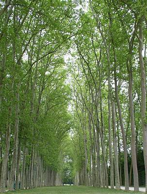 Art Print featuring the photograph Versailles Tree Garden 2005 by Cleaster Cotton